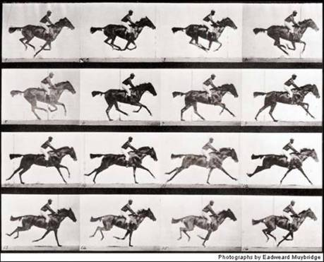 Muybridge Animal Locomotion