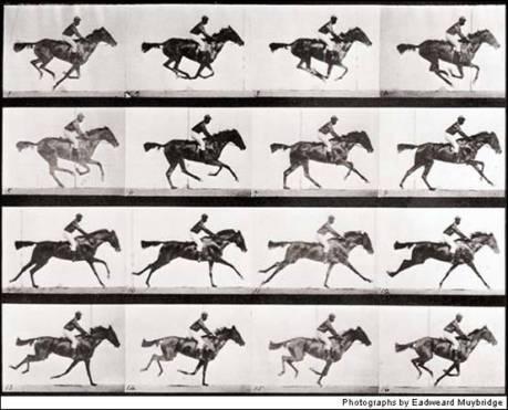 Muybridge Animal Locomotion