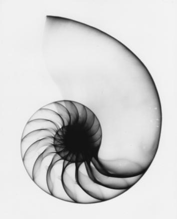 nautilus spirale